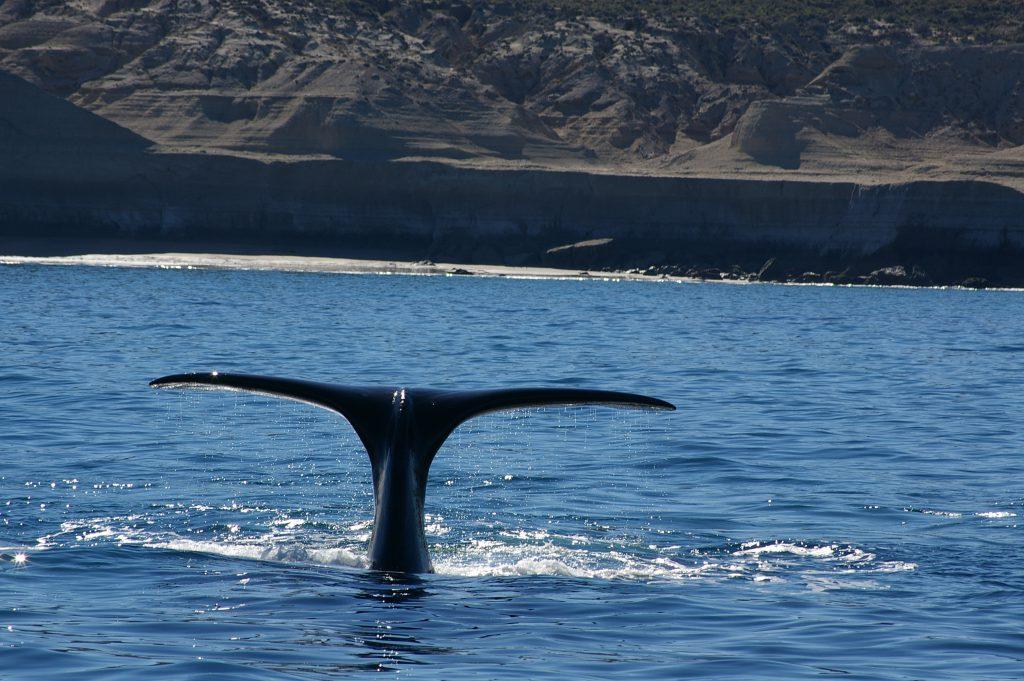 incontro ravvicinato con le balene