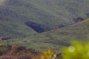 L'impronta di un Ufo sul cerro Pajarillo